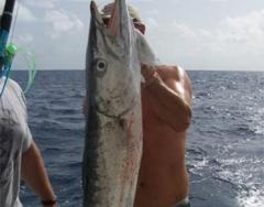 2010fish2
