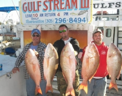 Mutton Snapper-Gulfstream