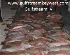 Mutton Night Fishing GULFSTREAM IV