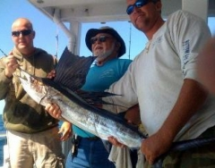 sail fish on the Gulfstream