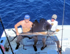 14-sailfish