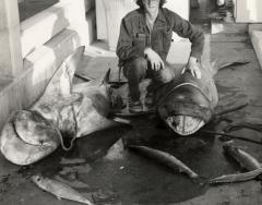 fishing-key-west-charters-2sharks