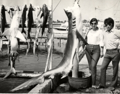 fishing-key-west-charters-large-shark