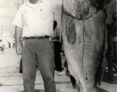 A 156 1/2 pound warsaw grouper caught on the chaarter boat Sandy Bill with Captain Wickers. Photo from the Wil-Art Stuido, gift of Angie Marine.