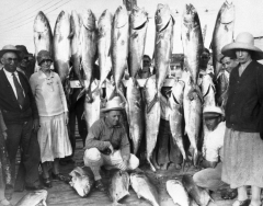 A catch of large amberjacks from a Key West charter boat C. 1935. From the Dale McDonald Collection.