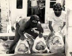 Captain Eddie Agin,left, and MarkBarrett of the charter boat OMB holding open the mouths of three large sharks. Photo from the Wil-Art Stuido, gift of Angie Marine.