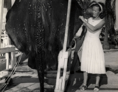 A woman standing by 385 pound ray caught on a Key West charter boat in September 1965. Photo from the Wil-Art Stuido, gift of Angie Marine.