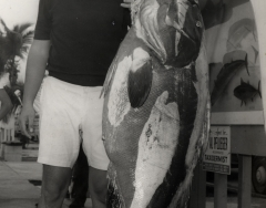 Don Schroeder with a 191 1.2 pound warsaw grouper cauth on the charter boat Sandy Bill weith Captain Willie Wickers. Photo from the Wil-Art Stuido, gift of Angie Marine.